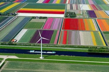 Campos de tulipas na Holanda - Foto: Normann Szkop