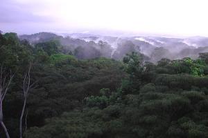 A selva panamenha. Fonte: Beacon South America