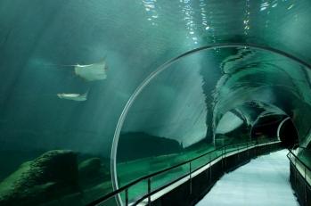 aquario-agnnaldo-motta-2
