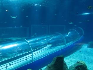 tunel-aquario