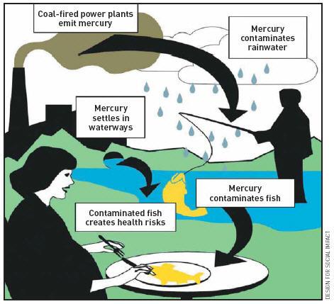 Peixes-contaminados-por-Mercúrio