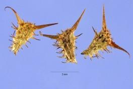 Carrapatos no microscópio